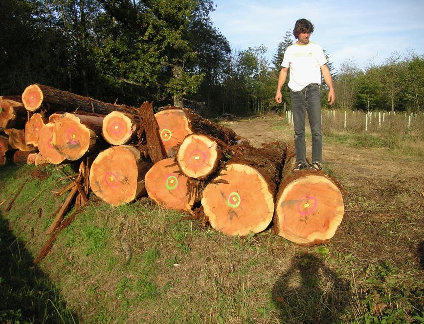 Sequoia sempervirens de Beaumont les Autels 28